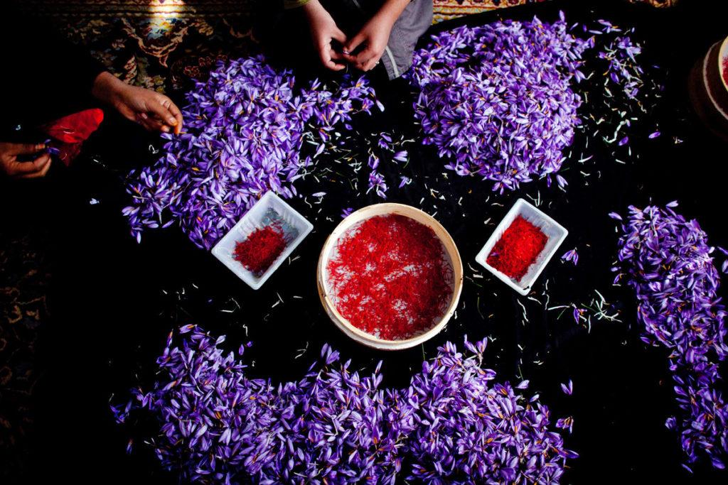 Saffron Rose Festival
