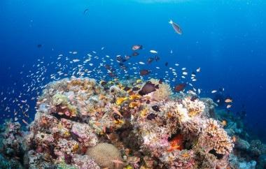 Dive Center coral restoration program