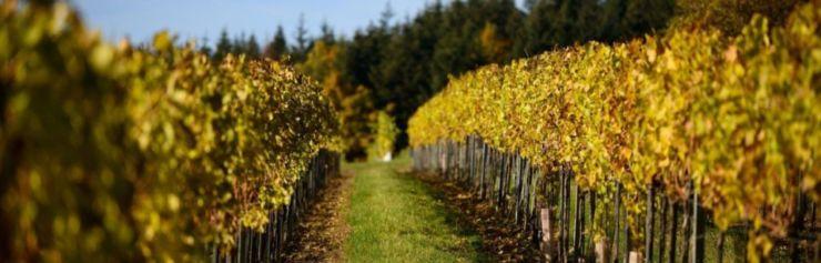 wineyard wineyards