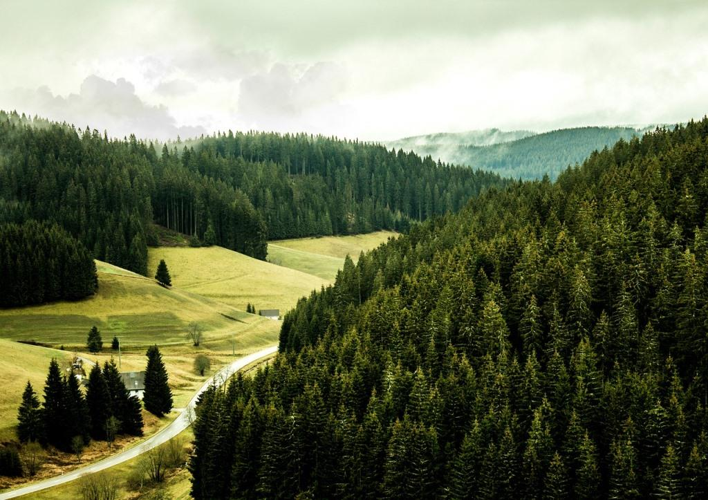 russia forest