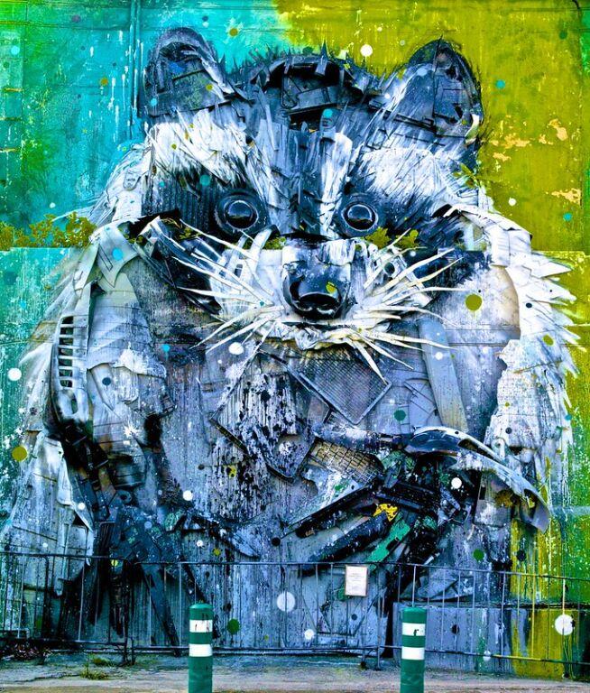 Big Raccoon lisbon