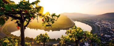 Cruises Moselle