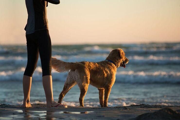 beach pet dog
