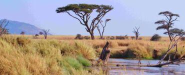 Safari Tanzania Africa