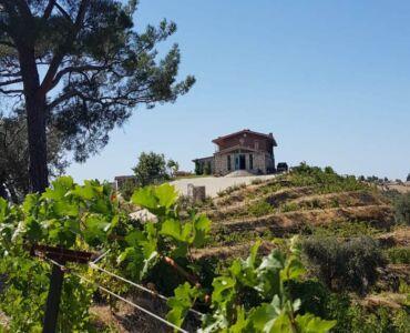 ayda winery