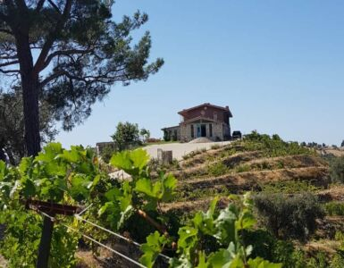 ayda winery