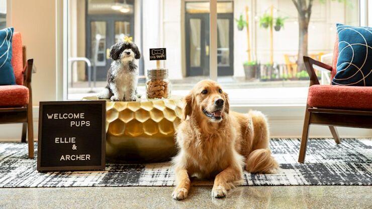Pet-Friendly Hotels